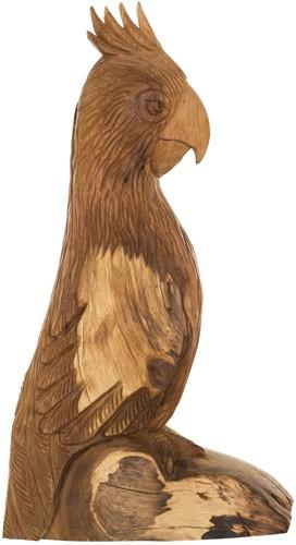 MUST Living papegaai Rio